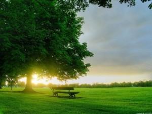 Счастье-парк